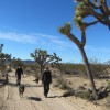 Dog Friendly Hiking in Joshua Tree