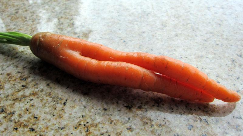 girl-carrot