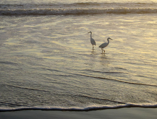 beach-birds