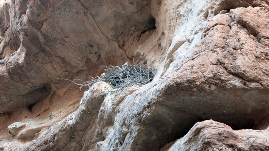 owl-nest