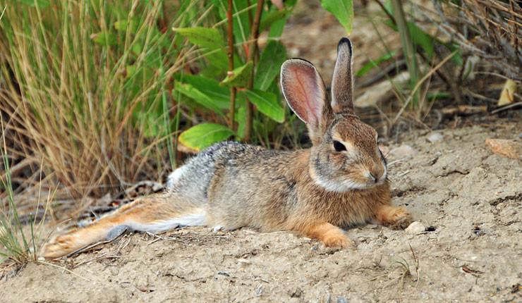 sleepy-bunny